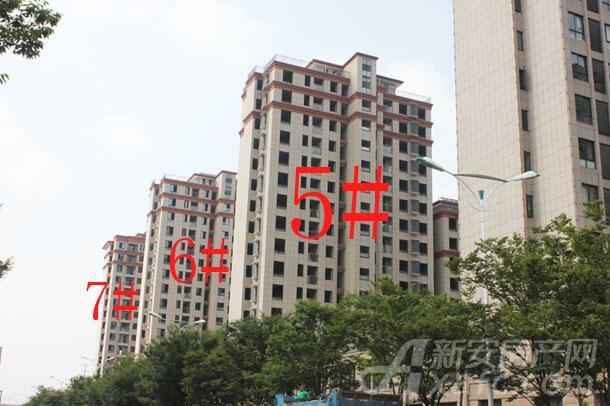 【顺达玫瑰园】8月工程进度:5-7#正在做外墙装饰