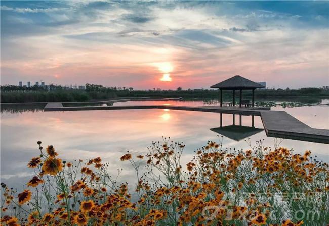 西湖湿地实景图