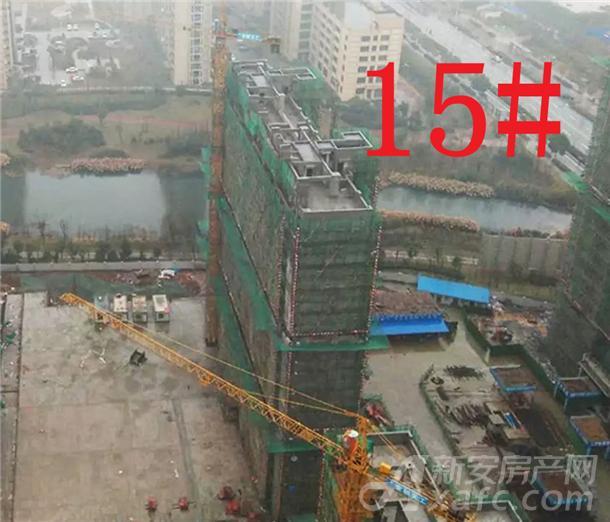15#楼工程进度