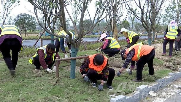 利辛城区绿化建设
