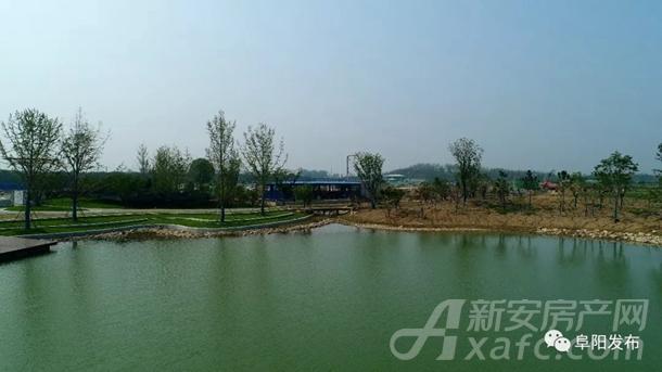 阜阳植物园烟霞湖面