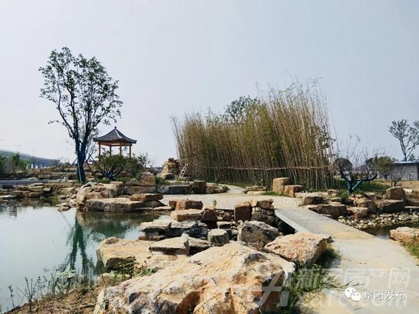 阜阳植物园烟霞湖一角